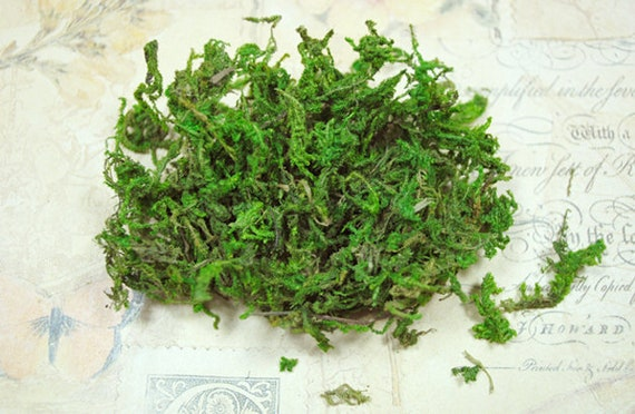 Getrocknetes Moos Trockenblumen Zum Basteln Für Zb Naturschmuck Oder Dem Befüllen Von Mini Glasfläschchen Und Kugeln
