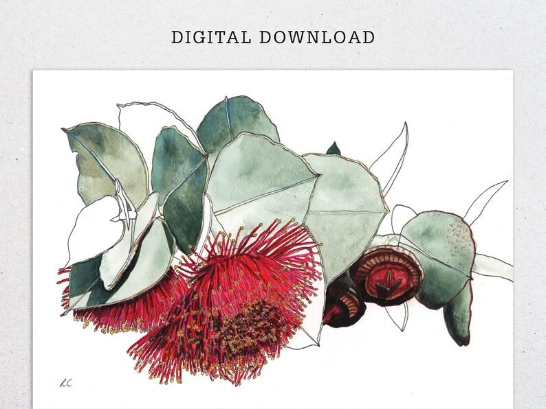 Mallee flower gum nut print digital download image 0