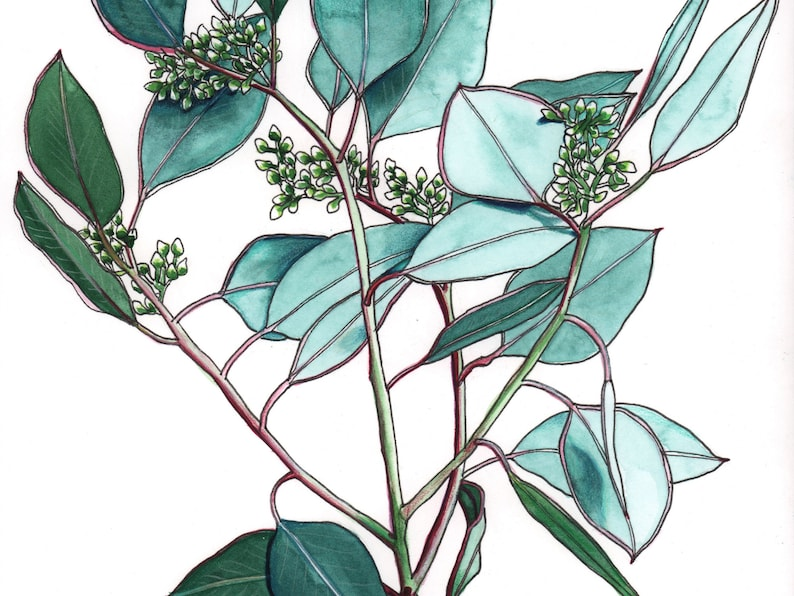 Gum leaves watercolour painting original image 0