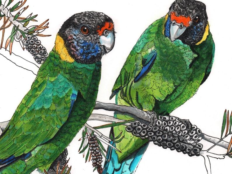 Ringneck Parrot pair watercolour painting original image 0