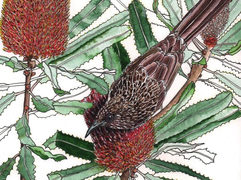 Wattlebird Banksia watercolour painting original image 0