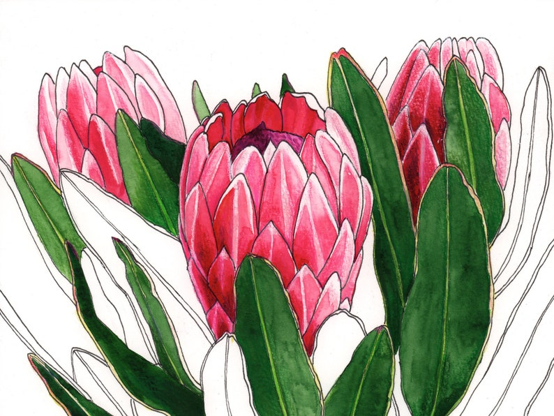Protea flowers vase watercolour painting original image 0
