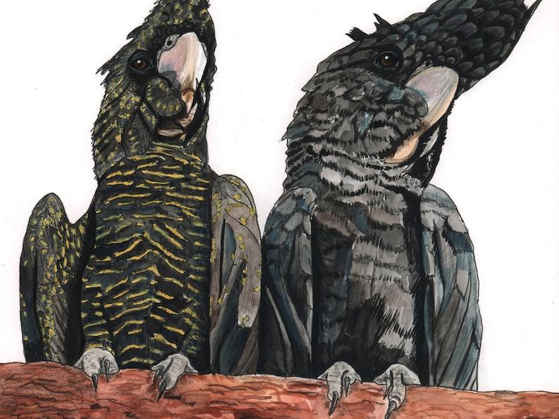 Red Tailed Black Cockatoos pair watercolour painting original image 0