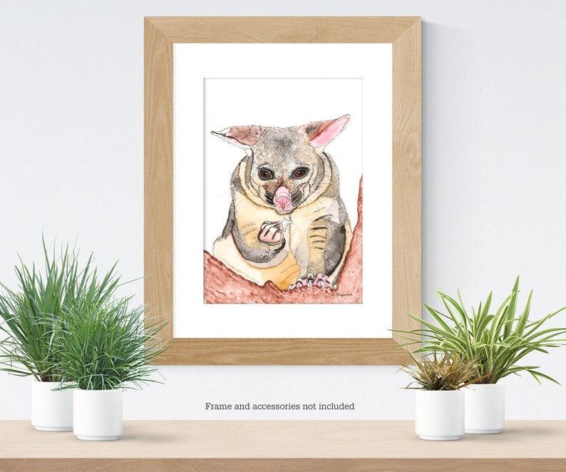 Brushtail possum watercolour painting original image 0