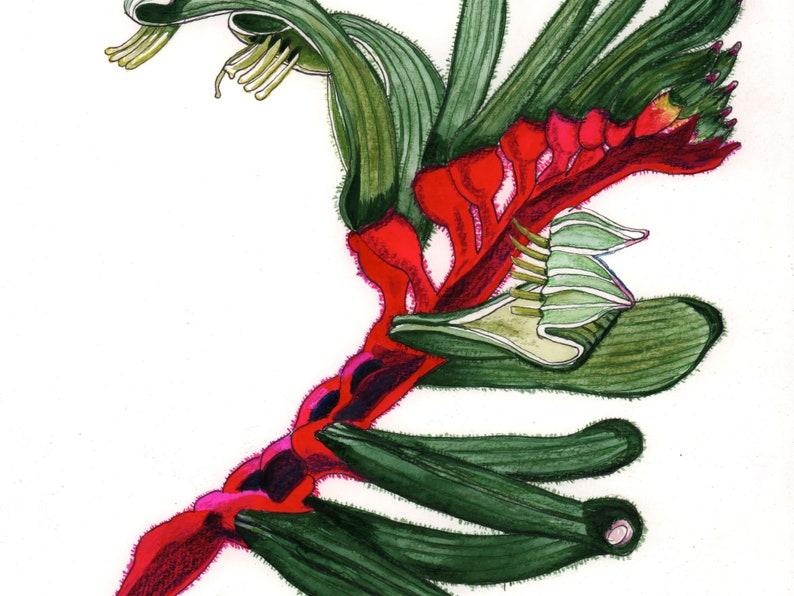 Kangaroo paw original watercolour painting original image 0