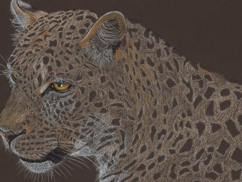 Leopard illustration coloured pencil image 0