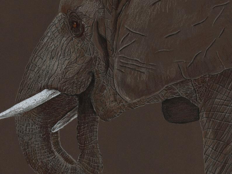 Elephant illustration coloured pencil image 0