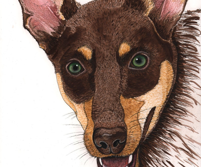 Australian kelpie watercolour painting original image 0