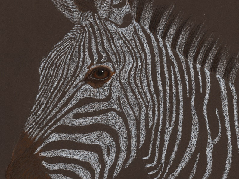 Zebra coloured pencil drawing image 0