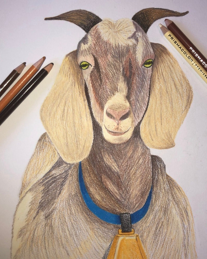 Nubian Goat Drawing