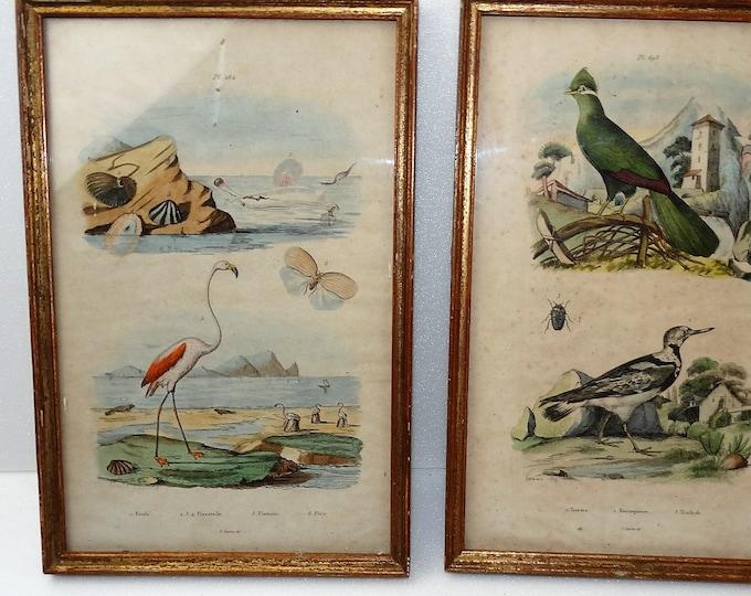 animal plank animals 19th E GUERIN DIR 1859 VARIN