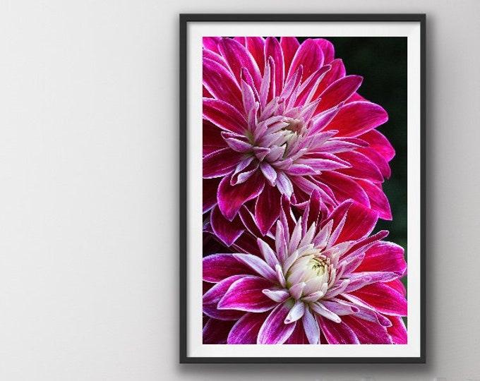 Flower Print,  Flower Photo, Flower Art Work, Wall Decor, Wall Art, Dahlia, Floral Print, Dahlia Print, Dahlia Flower, Dahlia, Flower Art