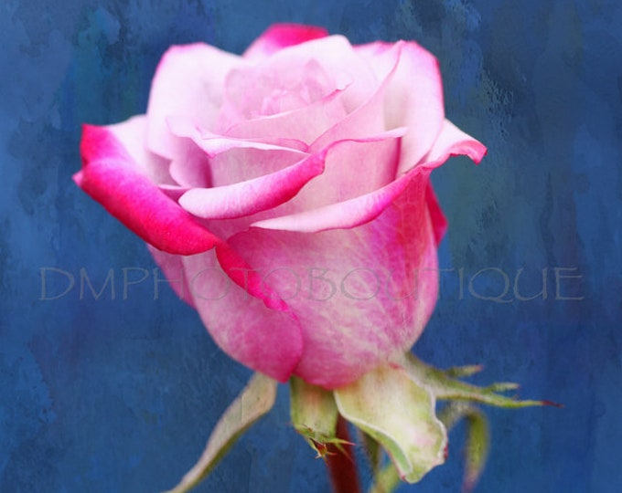 Rose Art Print, Rose Art Work, Rose Artwork, Rose Photo, Rose Photo, Rose Photography, Rose Print, Rose Wall Art, Rose Decor, Rose Canvas