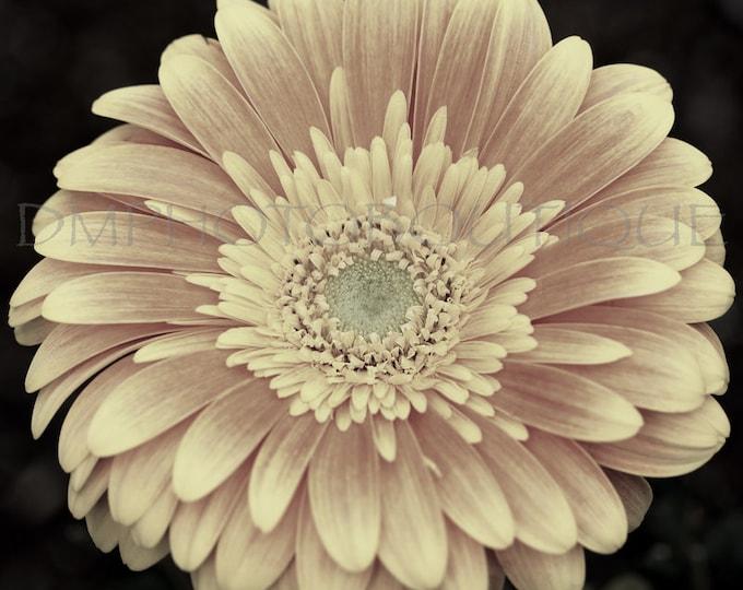 Flower Print, Flower Canvas, Flower Photo, Flower Art, Flower Wall Decor, Flower Wall Art, Floral Print, Flower Photography,Flower Art Print