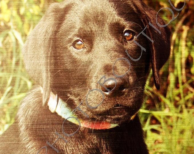 Black Lab Puppy Print, Notecards, Labrador Retriever Photo, Lab photo, Labrador Retriever Print, Dog Photo, Puppy Print, Dog, Lab Print
