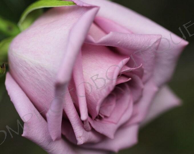 Rose Photo, Rose Print, Rose Photograph; Notecards, Flower Photo, Flower Print, Wall Decor, Home Decor, Wall Art, Flower Art, Rose Art