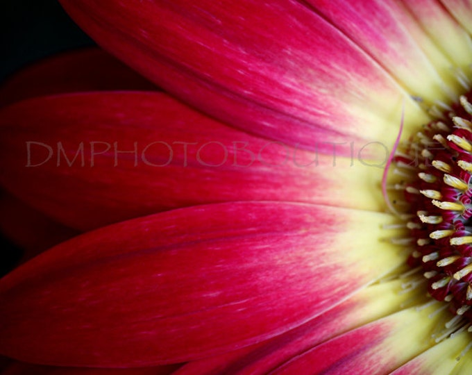 Gerbera Daisy Print, Flower Canvas, Flower Photo, Daisy Photo, Daisy Print, Macro Flower Photo, Flower Art Print, Flower Artwork, Flower