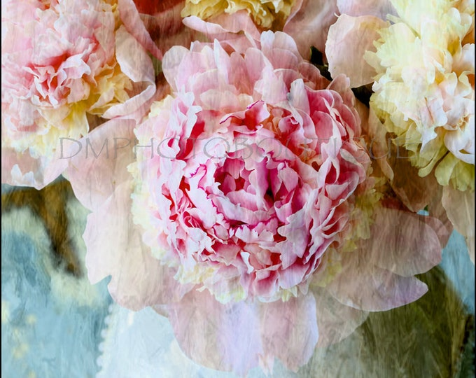 Peony Print, Peony Canvas, Peony Artwork, Peony Art, Peony Wall Art, Flower Art Print, Peony Art Print, Peony, Flower Art Print,FlowerCanvas