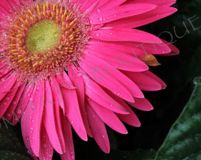 Pink Gerbera Daisy Print, Gerbera Daisy Print, Flower Print, Daisy Print, Flower Photo, Flower Wall Art, Flower, Daisy, Daisy Wall Art