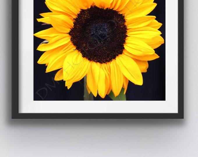 Happy Sunflower - Fine Art Print; Notecards, Sunflower, Sunflower Art, Sunflower Photo, Sunflower Print, Home Decor, Wall Decor, Wall Art