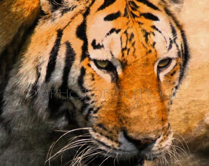 Tiger Canvas, Tiger Print, Tiger Wall Art, Tiger, Tiger Wall Art, Tiger Watercolor, Tiger Wall Print, Tiger Wall Decor, Tiger Art