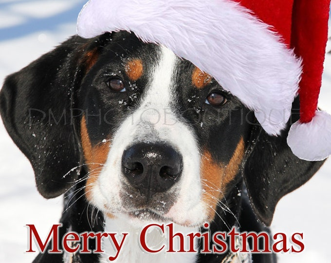 Greater Swiss Mountain Dog Christmas Cards, Greater Swiss Mountain Dog Holiday Cards, Swissy Christmas Cards, Swissy Holiday Cards, Dog