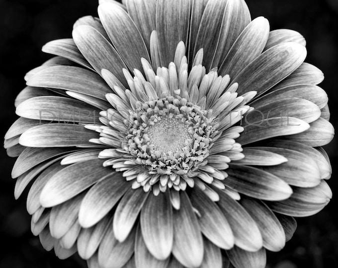 Black and White Flower Print, Flower Canvas, Flower Photo, Flower Art, Flower Wall Decor, Flower Wall Art, Floral Print, Flower Photography