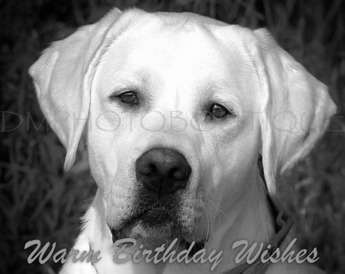 Labrador Retriever, Lab, Lab Birthday Card, Labrador Retriever Birthday Card, Dog Birthday Card, Dog Lover Card, Yellow Lab