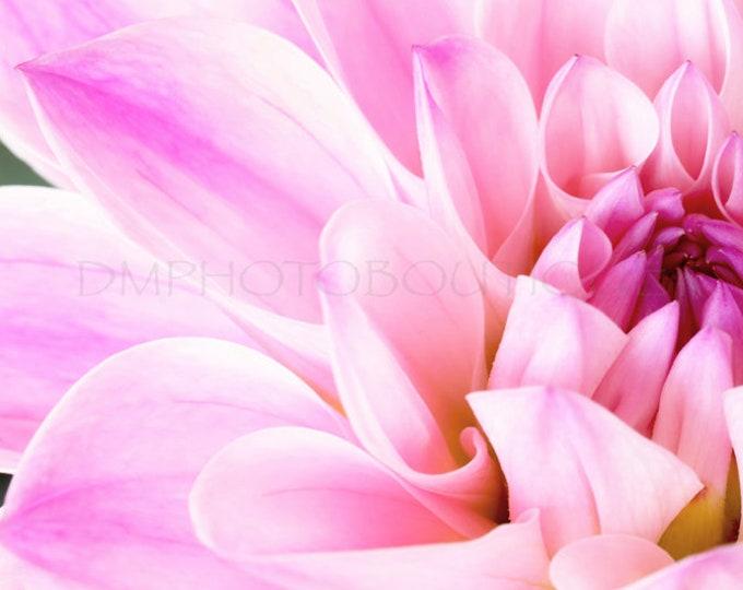Dahlia Print, Dahlia Canvas, Dahlia Wall Art, Dahlia Wall Hanging, Dahlia Art, Dahlia, Dahlia Decor, Flower Art, Flower Wall Art, Flower
