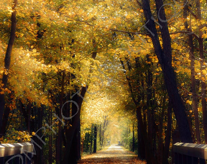 Autumn Print, Fall Notecards, Fall Canvas, Fall Print, Wall Art Print, Fall Colors, Fall Landscape,Fall Photo, Fall Art Print