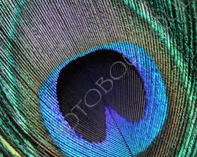 Peacock Feather 1 - Fine Art Print; Notecards, Peacock Feather Print, Feather, Home Decor, Wall Decor, Peacock Feathers, Peacock