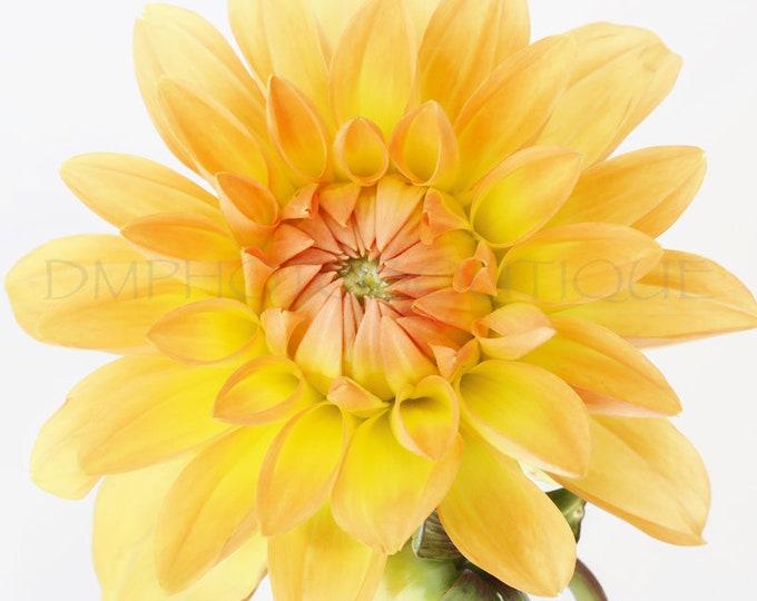Dahlia Print, Dahlia Canvas, Dahlia Wall Art, Dahlia Wall Hanging, Dahlia Art, Dahlia, Dahlia Decor, Flower Art, Flower Wall Art, Floral