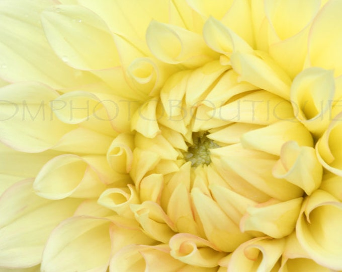 Dahlia Print, Notecards, Dahlia Art, Flower Photo, Flower Print, Dahlia Canvas, Wall Decor, Wall Art Print,Wall Art, Flower Art,Dahlia Photo