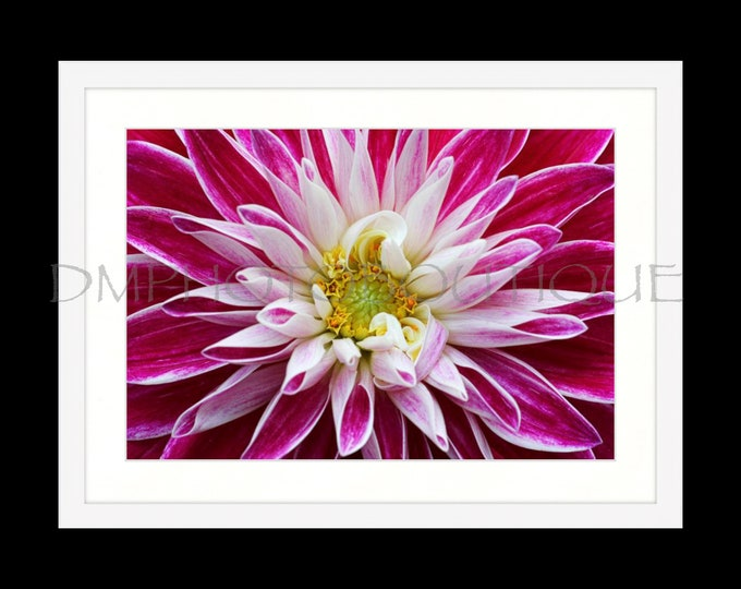 Framed Dahlia Print, Framed Art, Wall Art, Wall Decor, Home Decor, Dahlia Print, Flower Print, Home Art, Flower Art, Dahlia Decor
