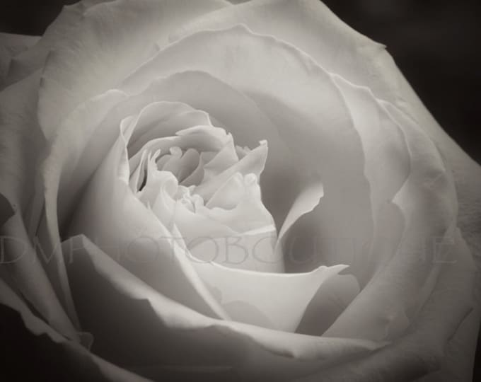 Black and White Rose Print, Rose Art Print, Rose Art Work, Rose Artwork, Photo, Rose Print, Rose Photo, Rose Wall Art, Rose Wall Decor