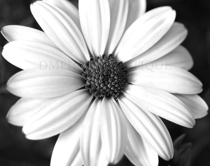 Daisy Wall Art, Daisy Wall Decor, Daisy Wall Hanging, Daisy Art, Daisy Print, Daisy Canvas, Daisy, Daisy Artwork, Daisy Art Print,Flower Art