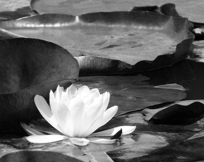 Water Lily Print, Water Lily, Black and White Art Print, Lily Pad Print, Lily Print, Black and White Wall Art, Wall Art, Wall Decor, Spa art
