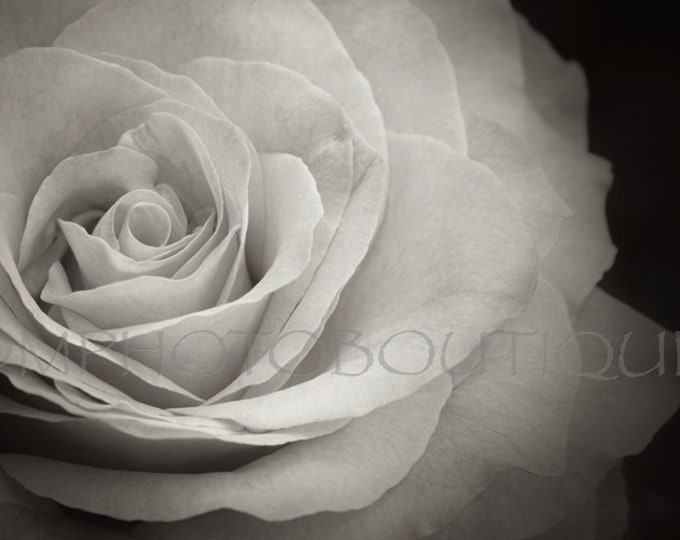 Black and White Rose Print; Notecards, Rose Photo, Flower Photo, Black and White Wall Art, Wall Decor, Home Decor, Rose Print, Rose