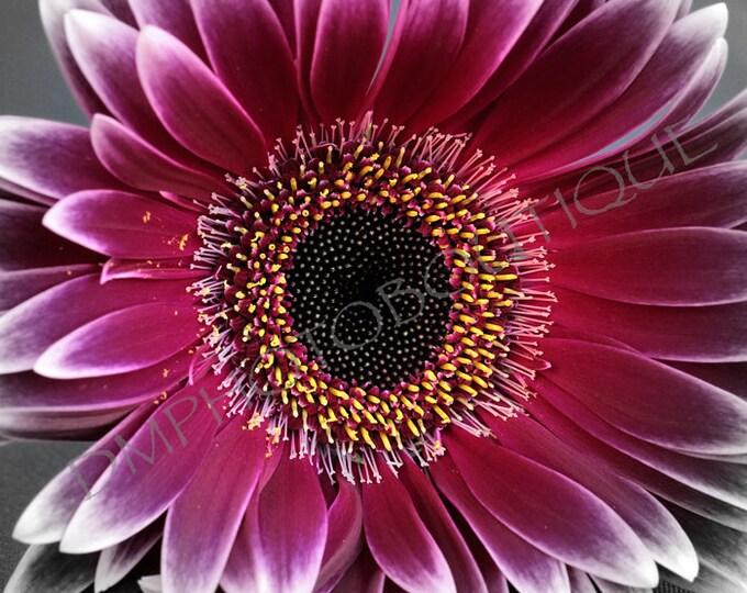 Artistic Gerbera Daisy Print, Flower Print, Gerbera Daisy, Flower Photo, Close Up Flower, Home Decor, Cool Flower, Notecards, Flower Art