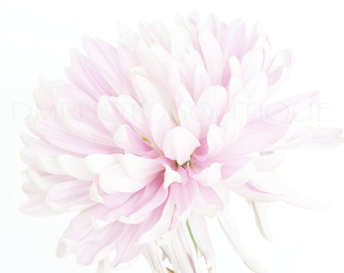 Flower Print, Flower Photo, FlowerArt, Wall Decor, Wall Art, Floral Print, Flower Photography, Flower Art Print, Flower Artwork, Floral Art
