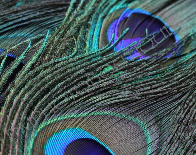 Peacock Feather 2 - Fine Art Print, Notecards, Home Decor, Wall Art Prints, Peacock, Wall Decor, Feather, Feather Art, Wall Art, Art Print