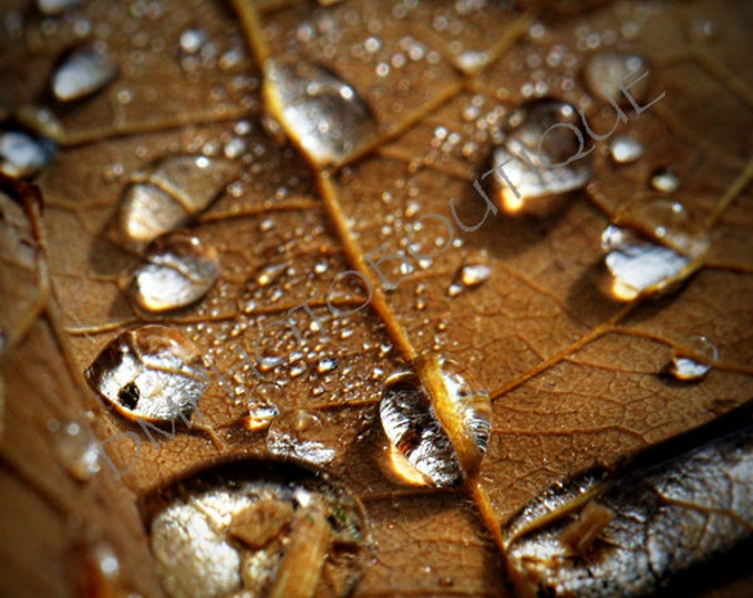 Fall Print, Fall Canvas, Leaf Canvas, Leaf Print, Wall Art Print, Wall Decor, Leaf Photo, Macro Art, Fall Art, Leaf, Water Droplets Print
