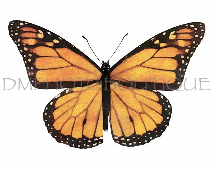 Monarch Butterfly Canvas, Monarch Butterfly Print, Butterfly Print, Butterfly Photo, Butterfly, Monarch Butterfly, Butterfly Notecards