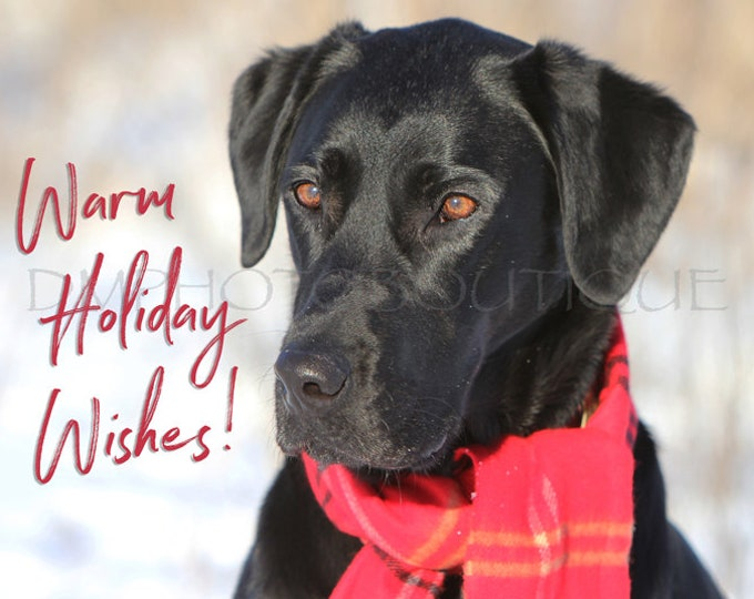 Labrador Retriever Christmas Card, Labrador Retriever, Lab, Lab Christmas Card, Christmas Card, Dog Christmas Card, Black Lab