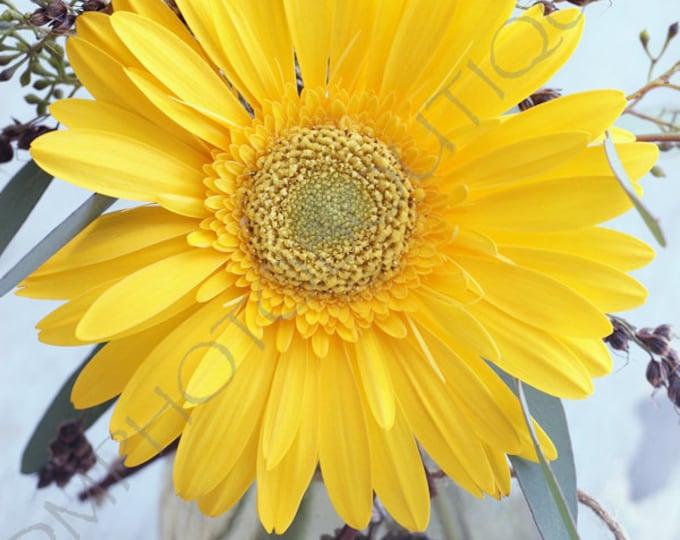 Flower Photo, Flower Print, Flower Notecards, Wall Decor, Wall Art, Daisy Art, Flower Photography, Flower Art, Daisy Print, Daisy