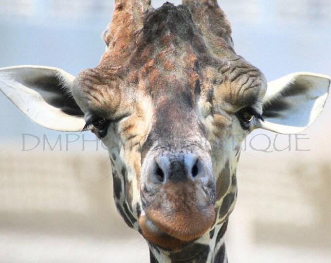 Giraffe Print, Giraffe Art Print, Giraffe Art, Giraffe Canvas, Giraffe Wall Art, Giraffe Wall Decor, Giraffe Wall Hanging, Giraffe