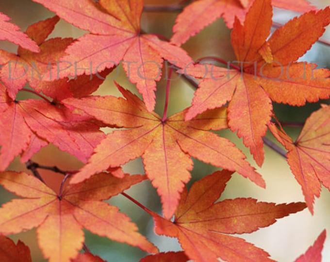 Fall Leaves Print, Leaves photo, Autumn Leaves Photo, Fall Colors, Wall Decor, Fall, Autumn, Leaf Print, Leaf Photo, Leaf Photography, leaf