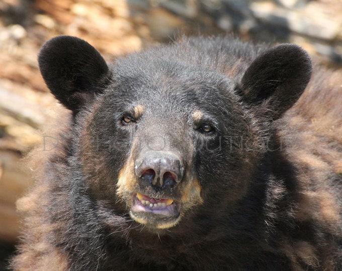 Grizzly Bear Print, Bear Print, Grizzly Bear, Grizzly Bear Art, Bear, Bear Art Print, Bear Art, Bear Photo, Bear Photograph, Nature Print