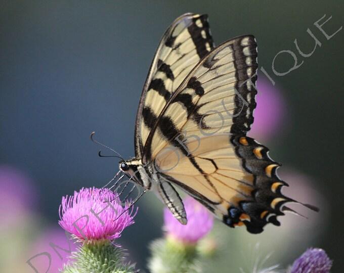 Butterfly Print, Butterfly Notecards, Butterfly Photo, Butterfly Gift, Butterfly Art, Butterfly Decor, Butterfly Wall Art, Butterfly