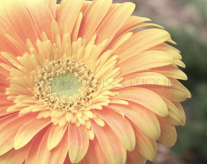 Flower Print, Flower Photo, Flower Art, Flower Wall Decor, Flower Wall Art, Floral Print, Flower Photography, Flower Art Print, Flower